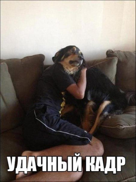 Смешные кошки и собаки - фото с надписями до слез 6