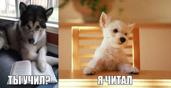 Смешные кошки и собаки - фото с надписями до слез 7