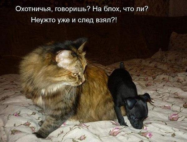 Смешные кошки и собаки - фото с надписями до слез 8