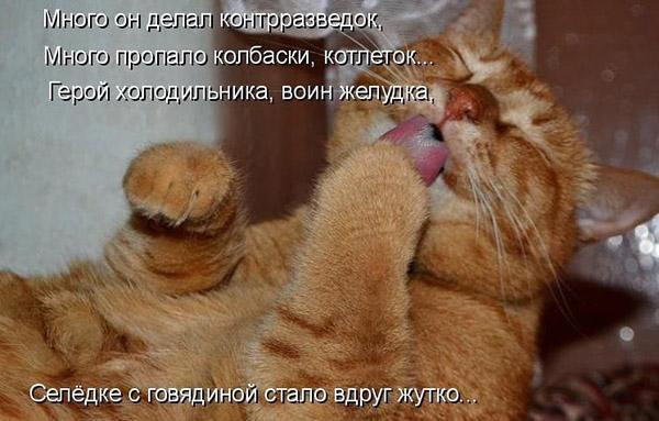 Смешные кошки и собаки - фото с надписями до слез 9