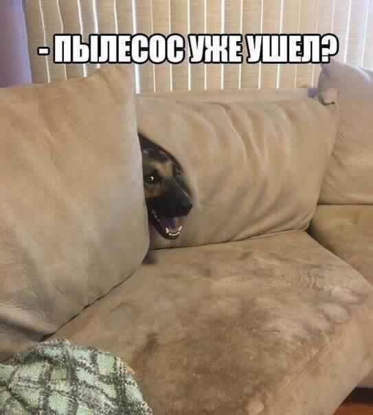 Смешные собаки - фото до слез, прикольные, веселые, забавные 10