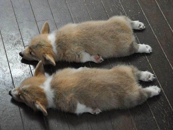 Смешные собаки - фото до слез, прикольные, веселые, забавные 11