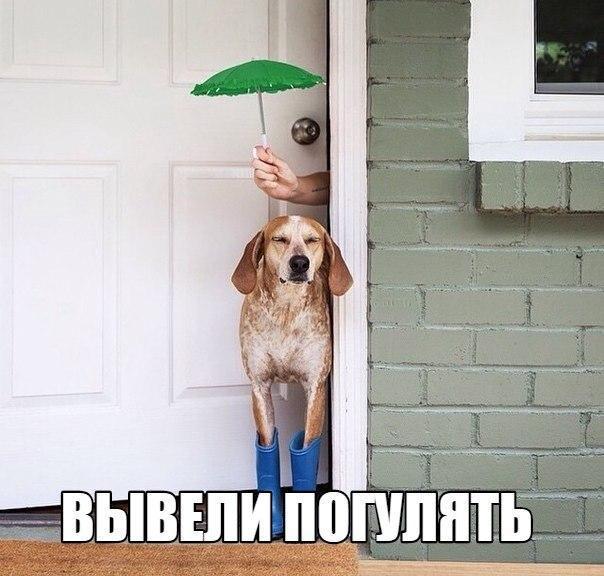 Смешные собаки - фото до слез, прикольные, веселые, забавные 13