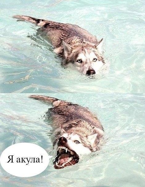 Смешные собаки - фото до слез, прикольные, веселые, забавные 2