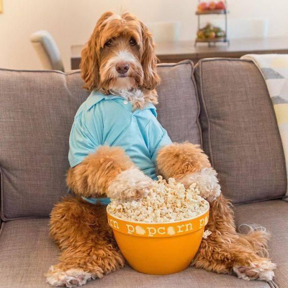 Смешные собаки - фото до слез, прикольные, веселые, забавные 4