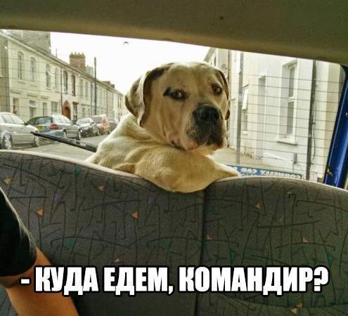 Смешные собаки - фото до слез, прикольные, веселые, забавные 6