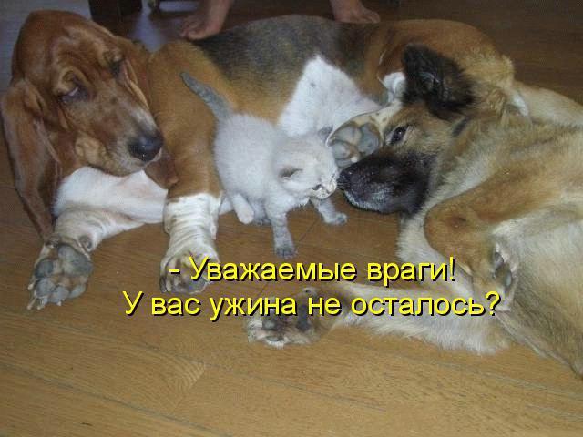 Смешные собаки - фото до слез, прикольные, веселые, забавные 7
