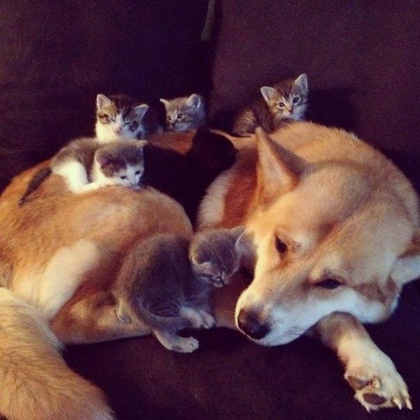 Смешные собаки - фото до слез, прикольные, веселые, забавные 8