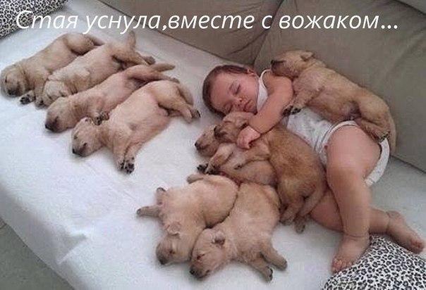 Смешные фото про собак до слез - смотреть бесплатно, онлайн 14