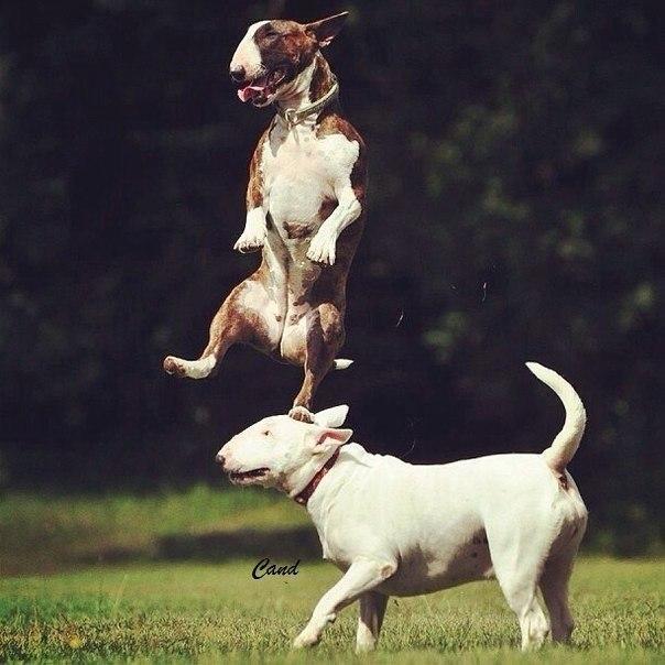 Смешные фото про собак до слез - смотреть бесплатно, онлайн 15