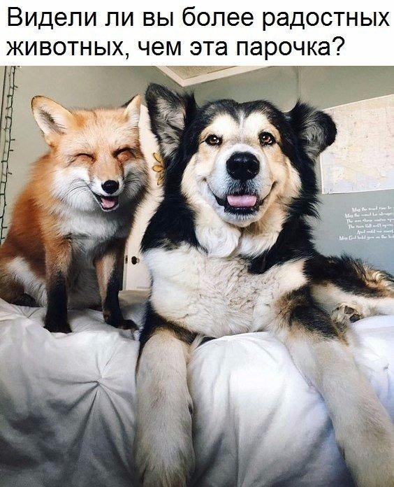 Смешные фото про собак до слез - смотреть бесплатно, онлайн 3