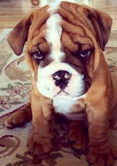 Собаки фото - красивые и смешные, прикольные, удивительные 1