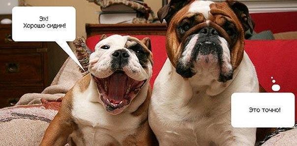 Собаки фото - красивые и смешные, прикольные, удивительные 5