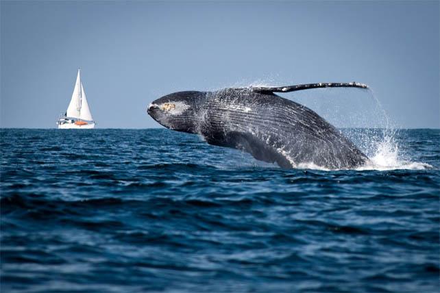 Средняя глубина тихого океана - описание, фото, интересные факты 3
