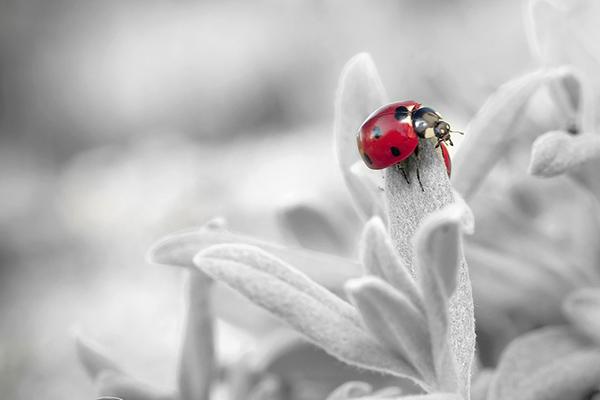 Удивительные и красивые картинки про природу - смотреть бесплатно 12