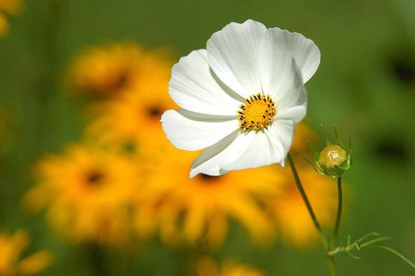 Удивительные и красивые картинки про природу - смотреть бесплатно 13