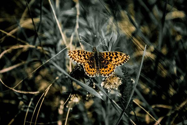 Удивительные и красивые картинки про природу - смотреть бесплатно 17