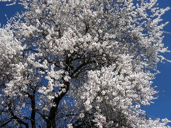 Удивительные и красивые картинки про природу - смотреть бесплатно 20