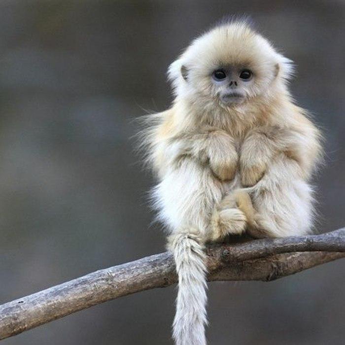 Фото обезьяны - смешные, веселые, ржачные, прикольные 14
