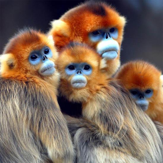 Фото обезьяны - смешные, веселые, ржачные, прикольные 3
