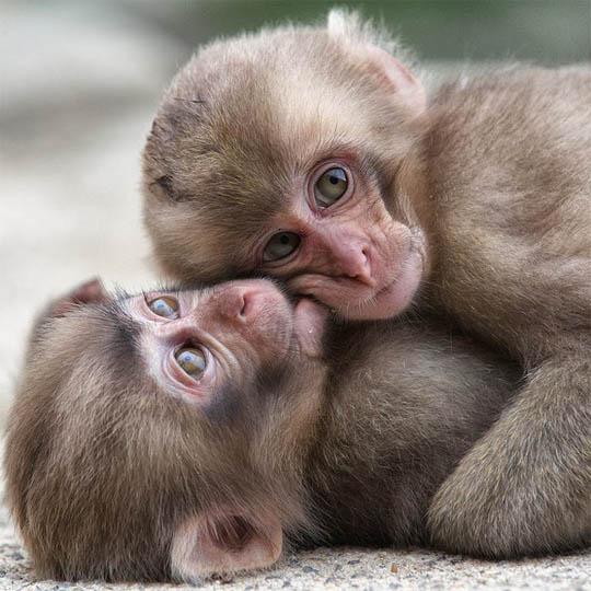 Фото обезьяны - смешные, веселые, ржачные, прикольные 4
