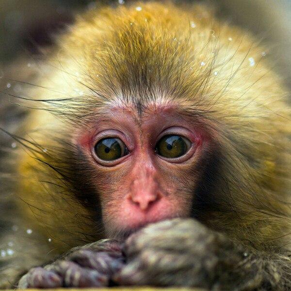 Фото обезьяны - смешные, веселые, ржачные, прикольные 6