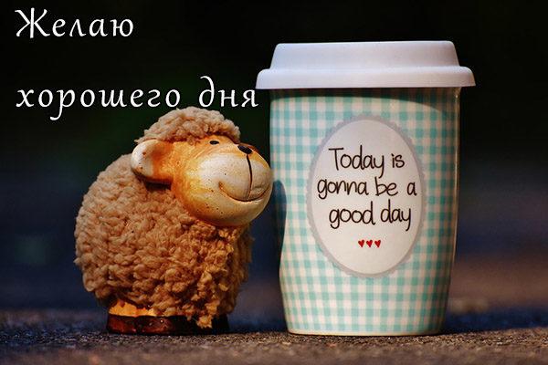 Хорошего дня подруга - картинки, фото, пожелание, открытки 8