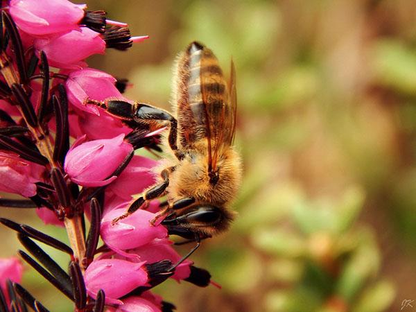 Весна фото красивые - удивительная природа, смотреть фото 2