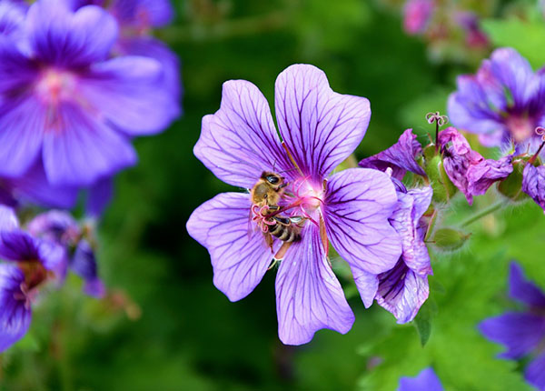Весна фото красивые - удивительная природа, смотреть фото 4