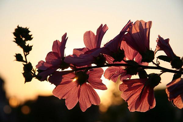 Весна фото красивые - удивительная природа, смотреть фото 7
