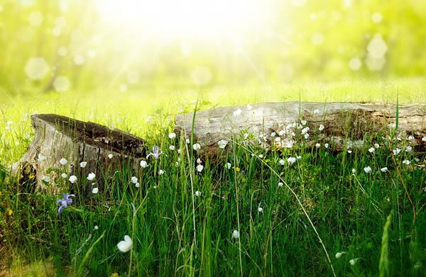Весна фото красивые - удивительная природа, смотреть фото 8