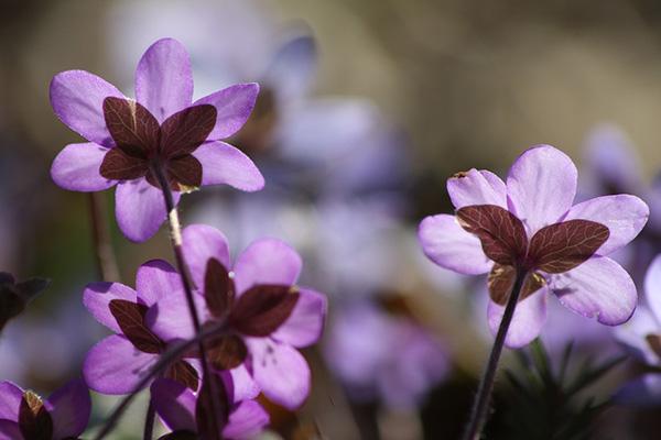 Весна фото красивые - удивительная природа, смотреть фото 10