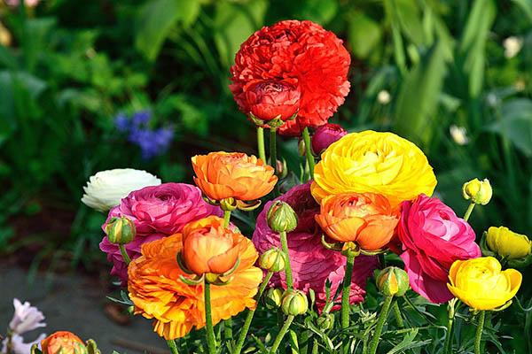 Весна фото красивые - удивительная природа, смотреть фото 11