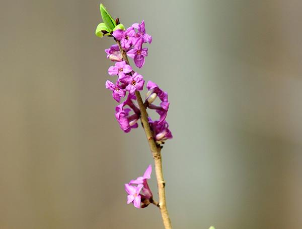 Весна фото красивые - удивительная природа, смотреть фото 16