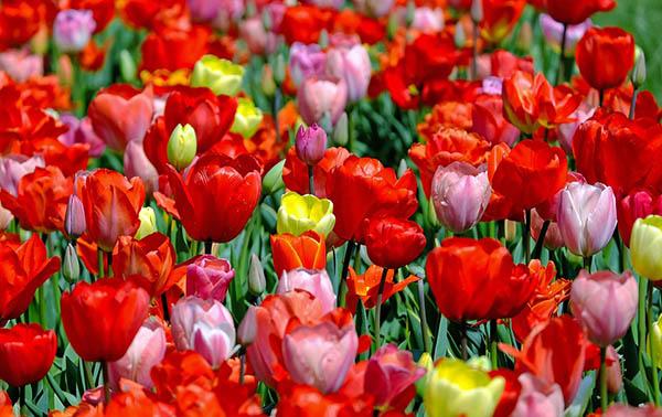 Весна фото красивые - удивительная природа, смотреть фото 19