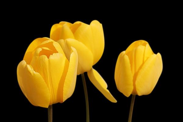 Весна фото красивые - удивительная природа, смотреть фото 20