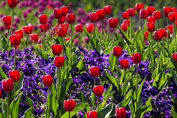 Весна фото красивые - удивительная природа, смотреть фото 18