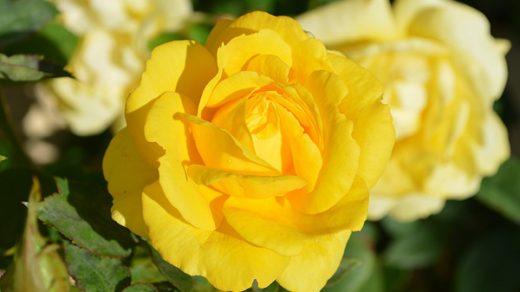 Весна фото красивые - удивительная природа, смотреть фото 21