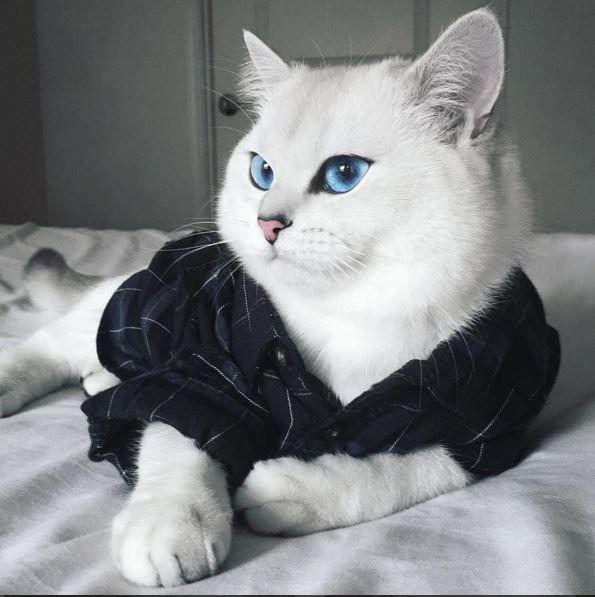 Белый кот с голубыми глазами - красивые фото, картинки, смотреть 5