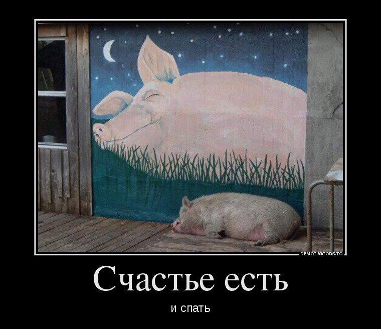 Веселые и смешные демотиваторы про животных - смотреть онлайн 11