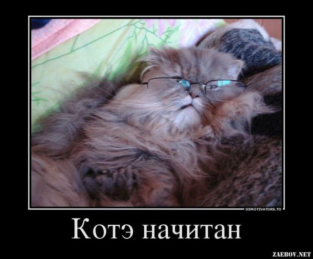 Веселые и смешные демотиваторы про животных - смотреть онлайн 12