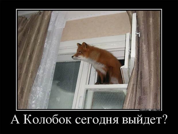 Веселые и смешные демотиваторы про животных - смотреть онлайн 14