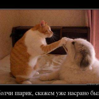 Веселые и смешные демотиваторы про животных - смотреть онлайн 15