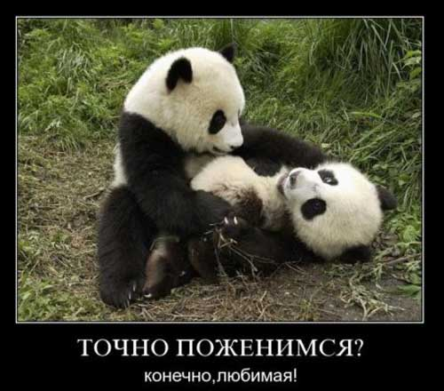 Веселые и смешные демотиваторы про животных - смотреть онлайн 2