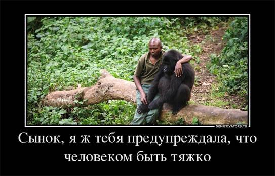 Веселые и смешные демотиваторы про животных - смотреть онлайн 3