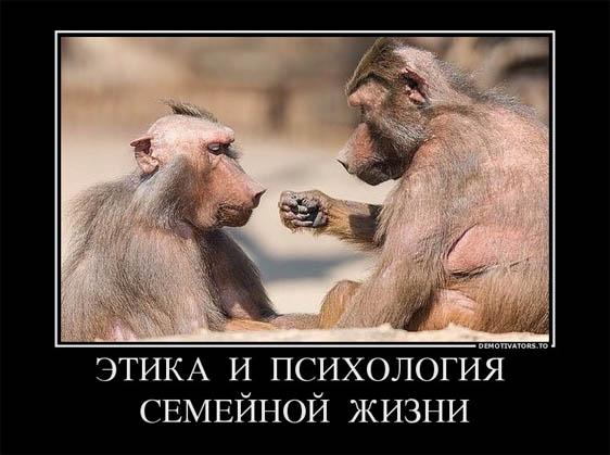 Веселые и смешные демотиваторы про животных - смотреть онлайн 9