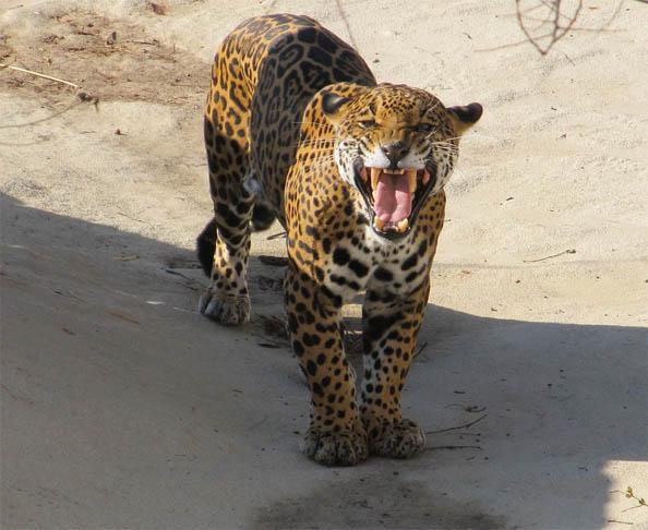 Восхитительные и красивые - картинки природы и животных 1