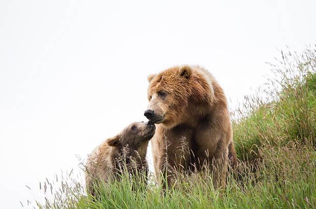 Восхитительные и красивые - картинки природы и животных 11