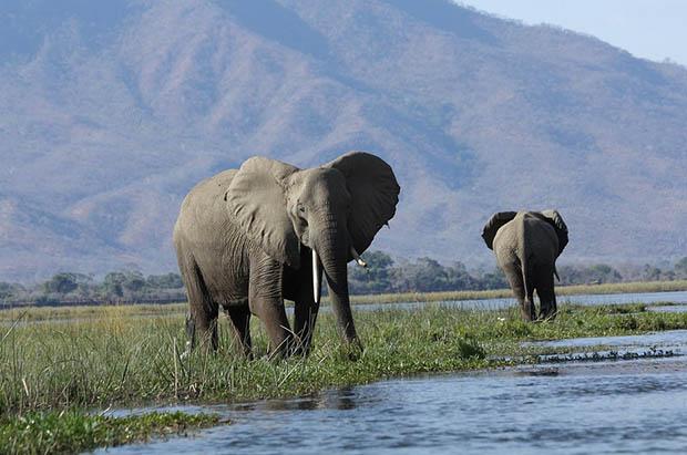 Восхитительные и красивые - картинки природы и животных 15