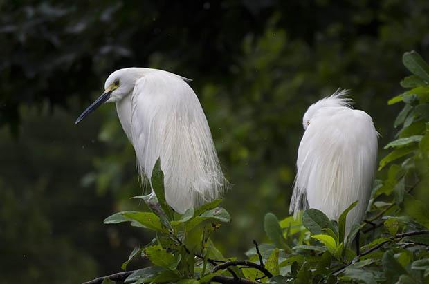 Восхитительные и красивые - картинки природы и животных 3
